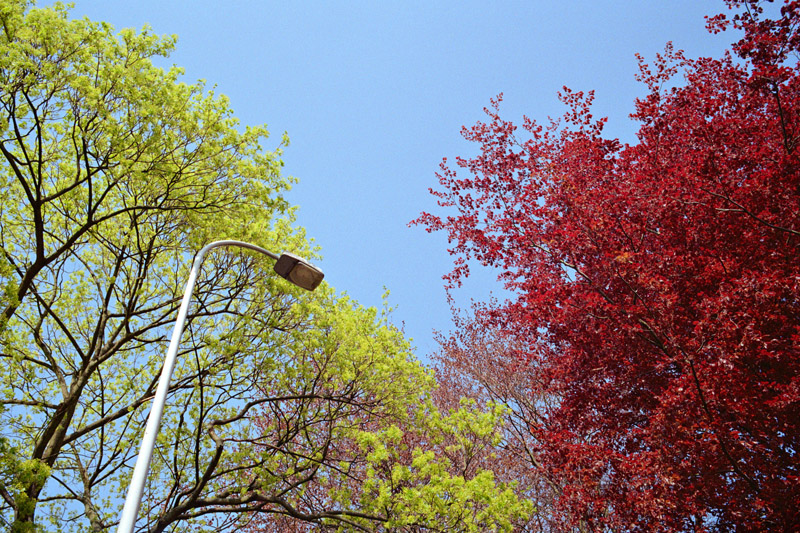 Green and red ( Flickr ) | Leica M6TTL Kodak Gold 200