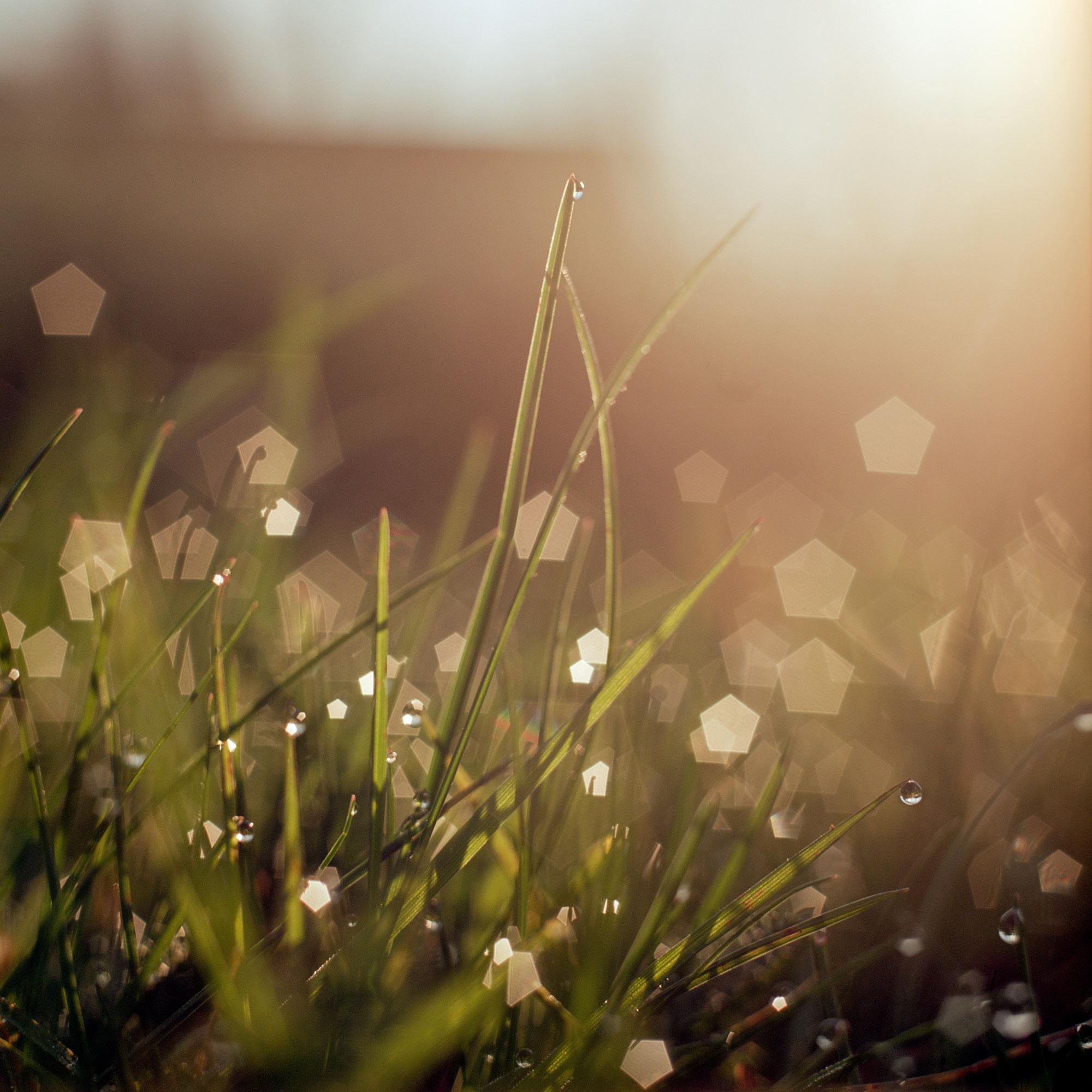 Dawn dew grass