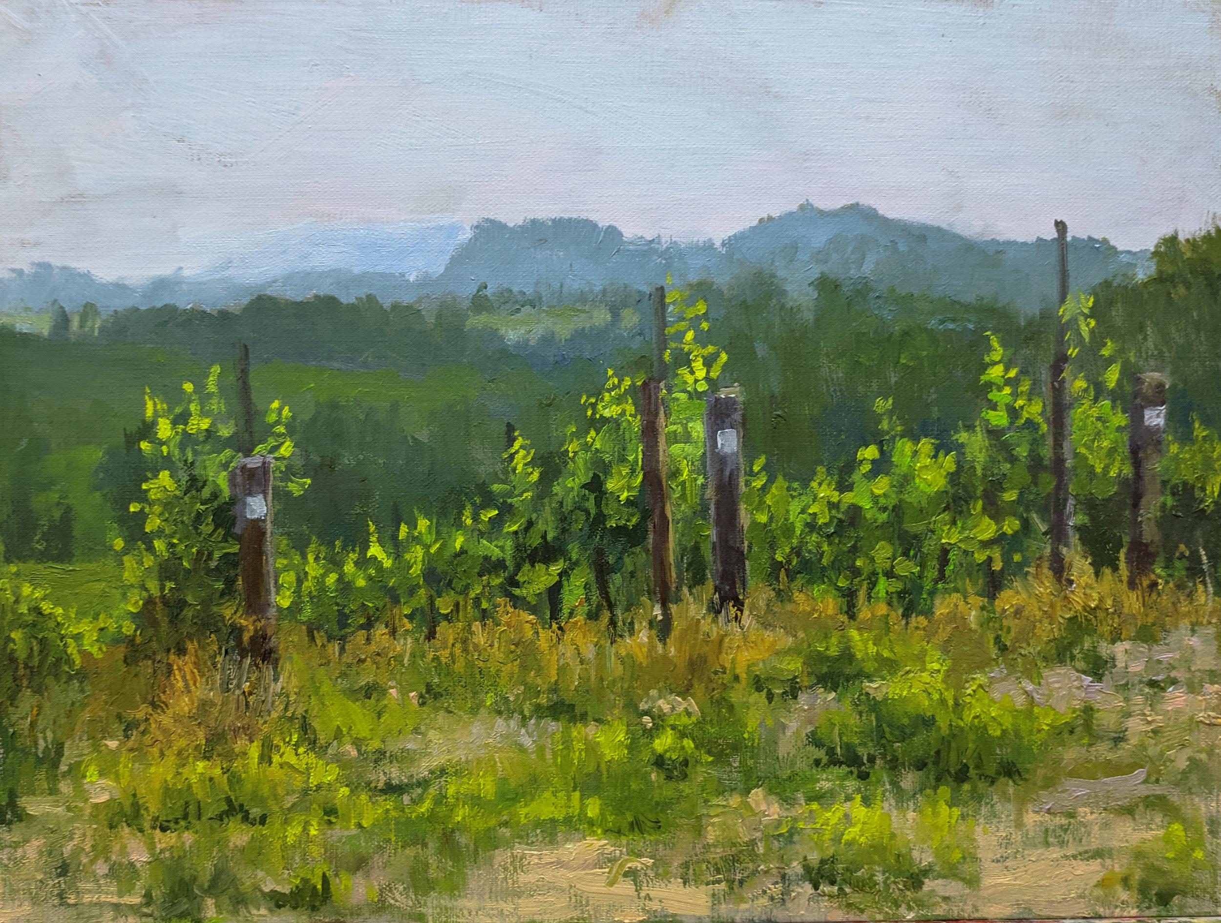appalachian haze - point lookout vineyards
