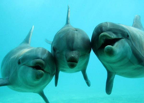 3dauphins.jpg