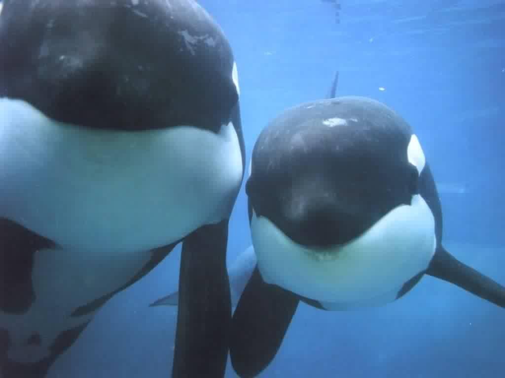 orques.jpg
