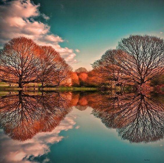 arbre reflexion.jpg