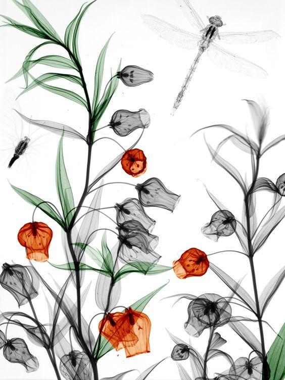 fleurs7.jpg