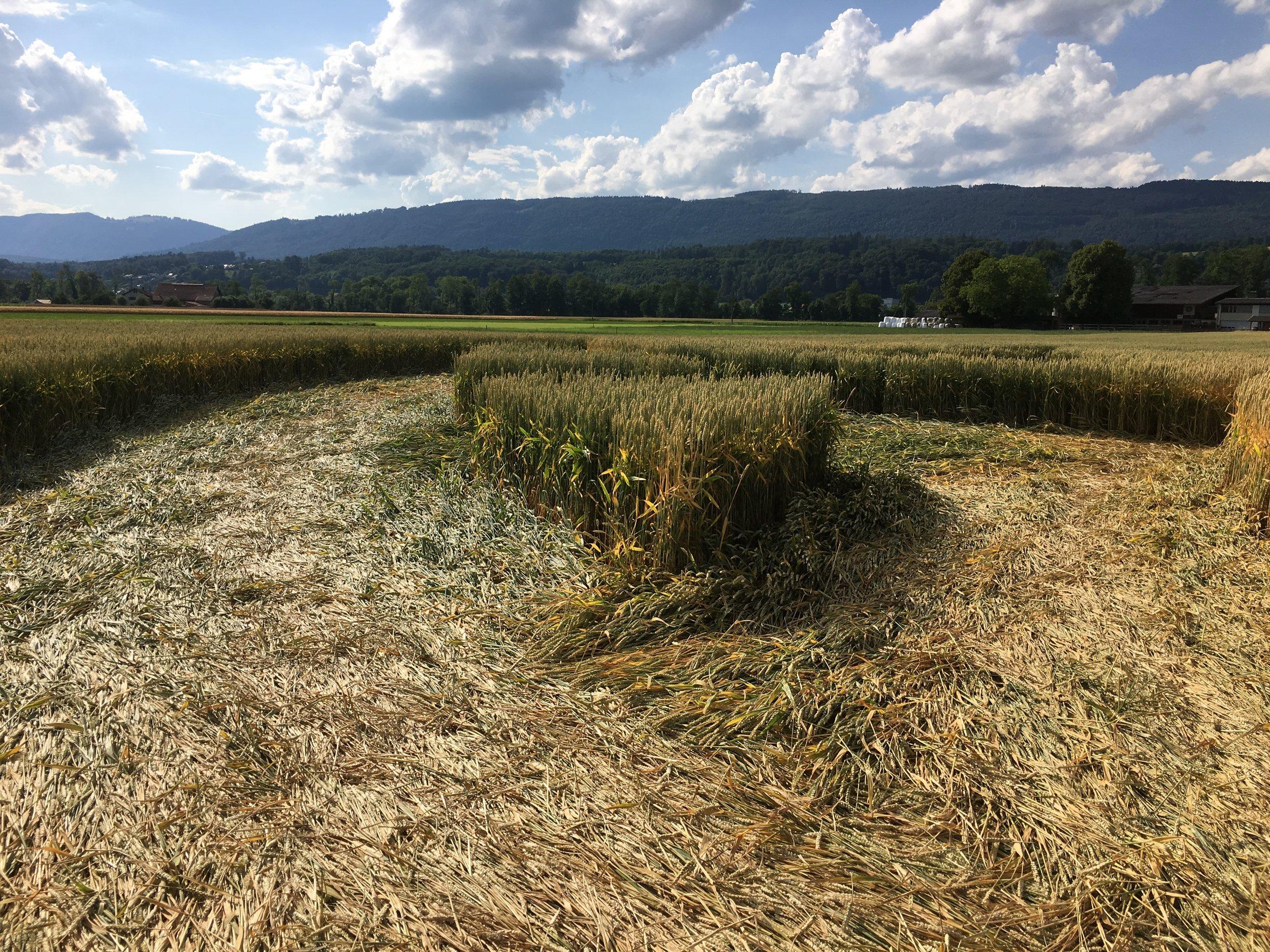 crop suisse4.JPG