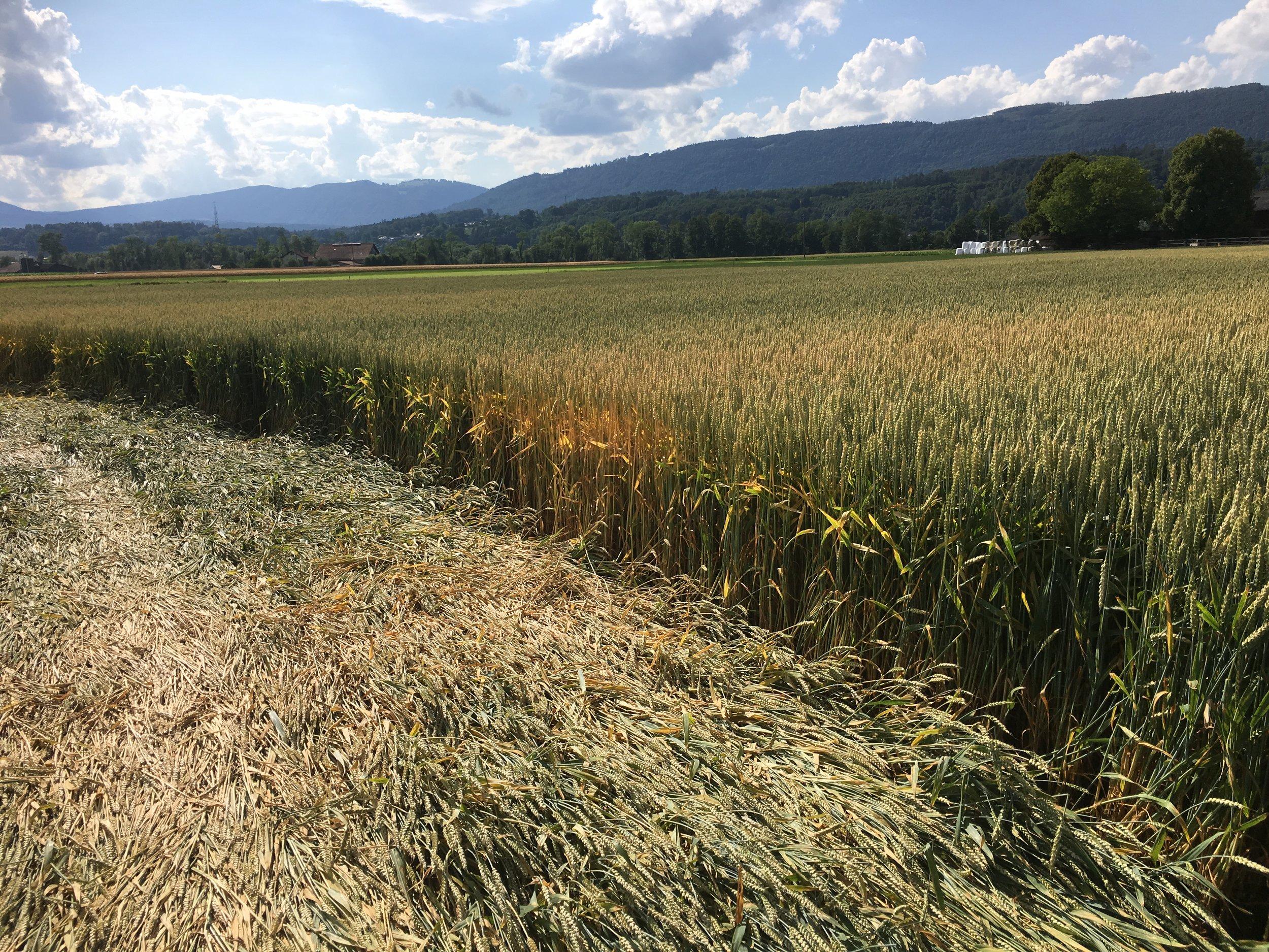 crop suisse7.JPG