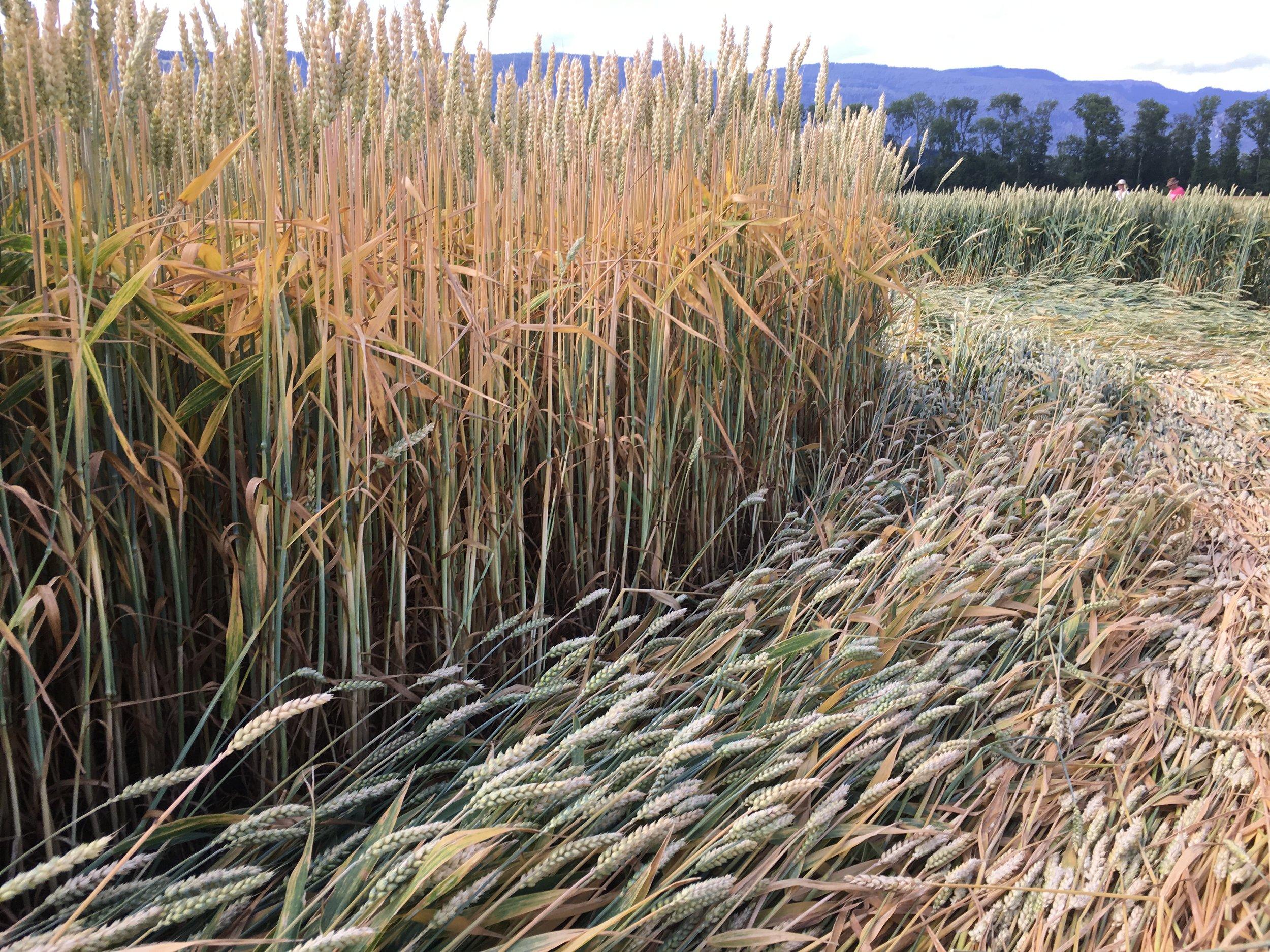 crop suisse11.JPG