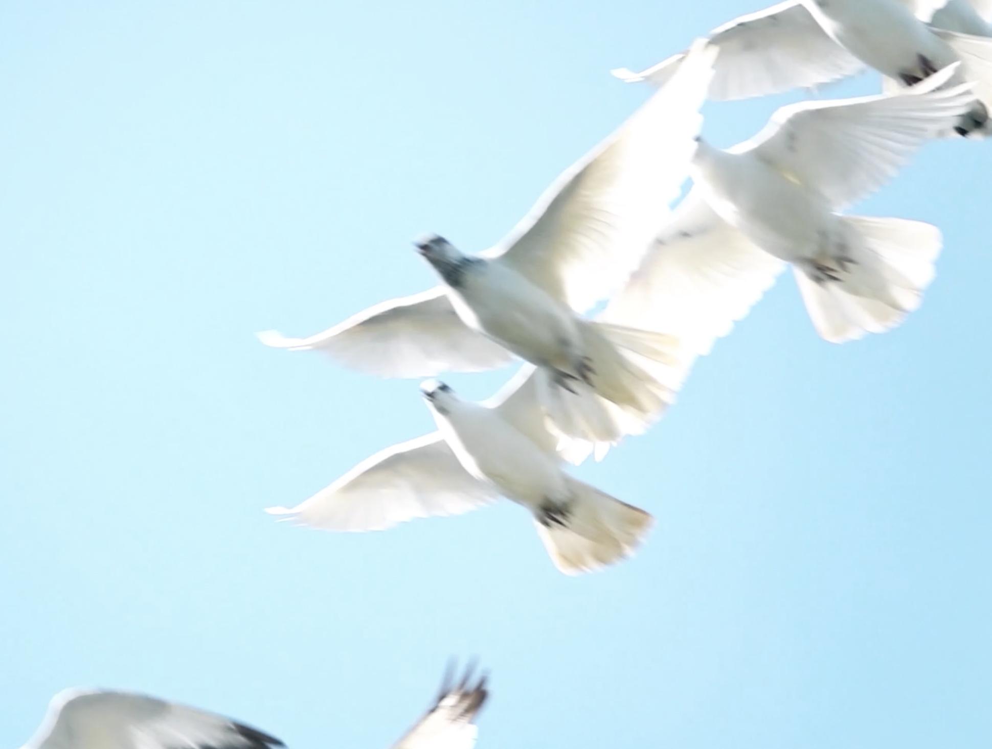 stage l amour en soi bird.png