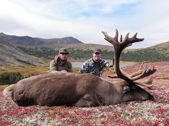 MOUNTAIN CARIBOU
