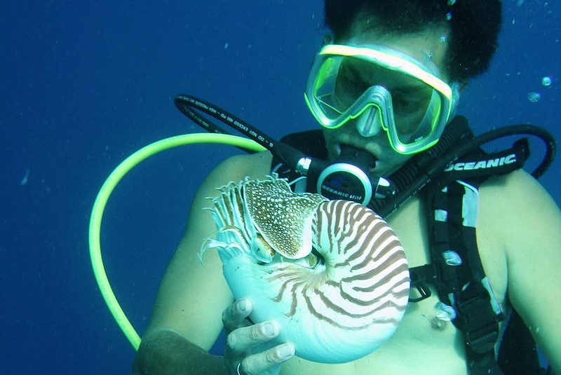 Once upon a time, the nautiluses preyed on our cowering jawless ancestors, forcing us to evolve. Lee R. Berger