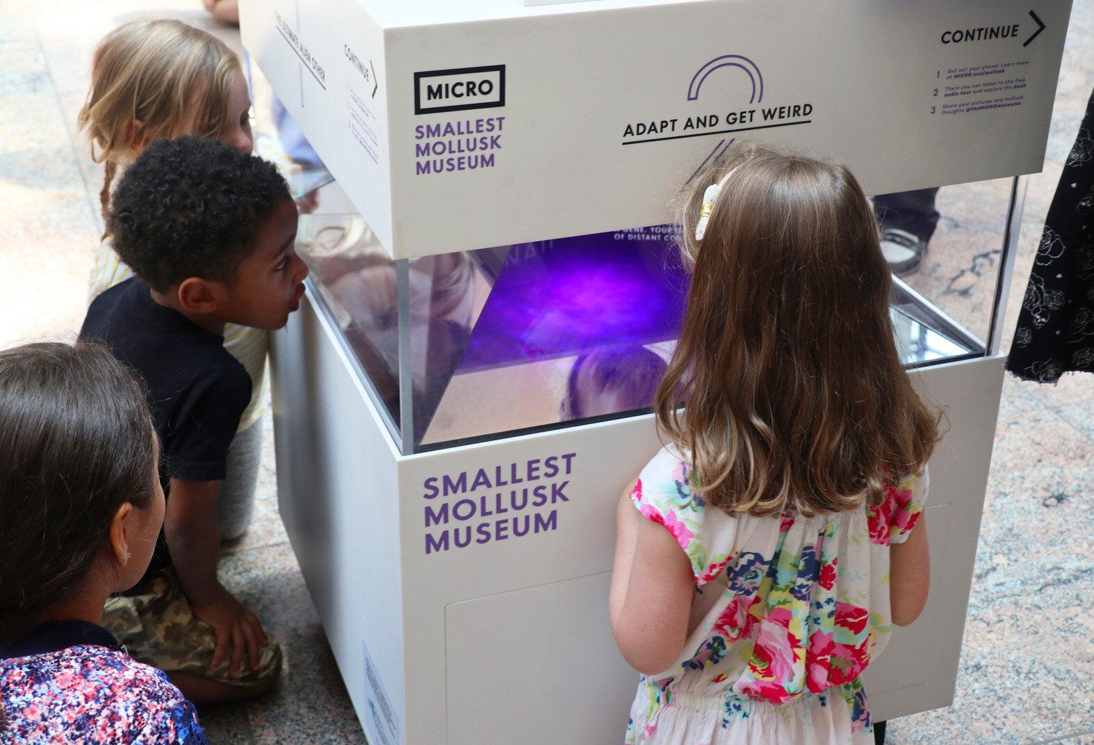 MICRO's Smallest Mollusk Museum_3_Credit Ricardo Monge.jpg