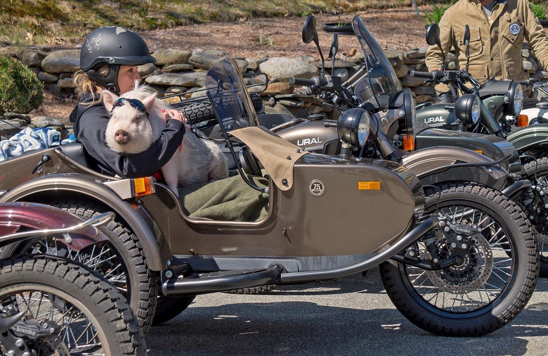 Ural-New-England-Spring-Rally-Pig.jpg