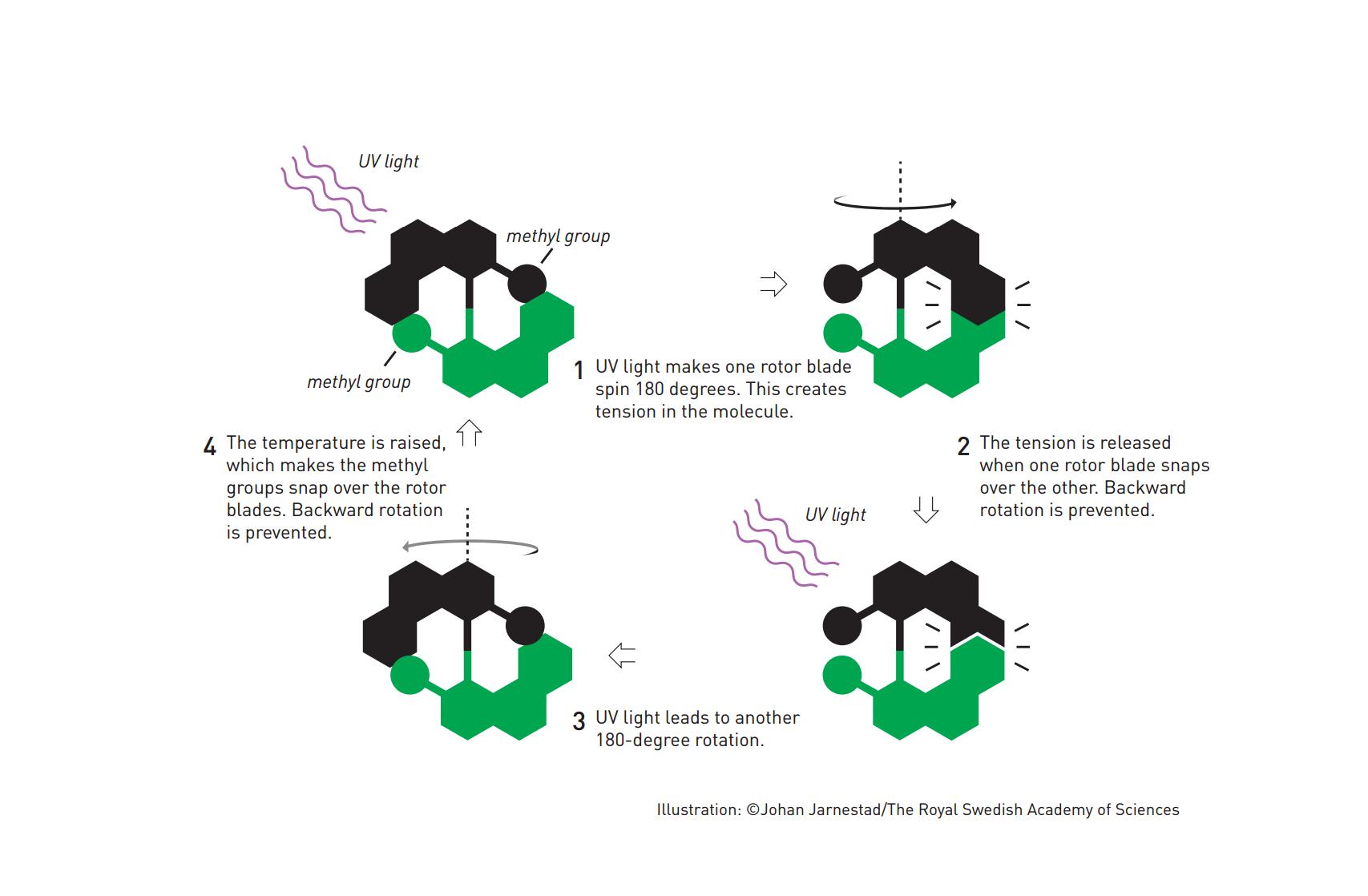 molecular-motor