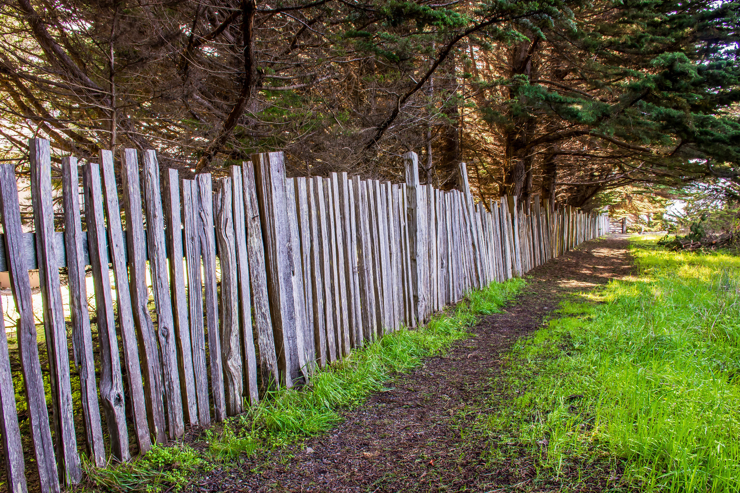 The Sea Ranch Fence Lines