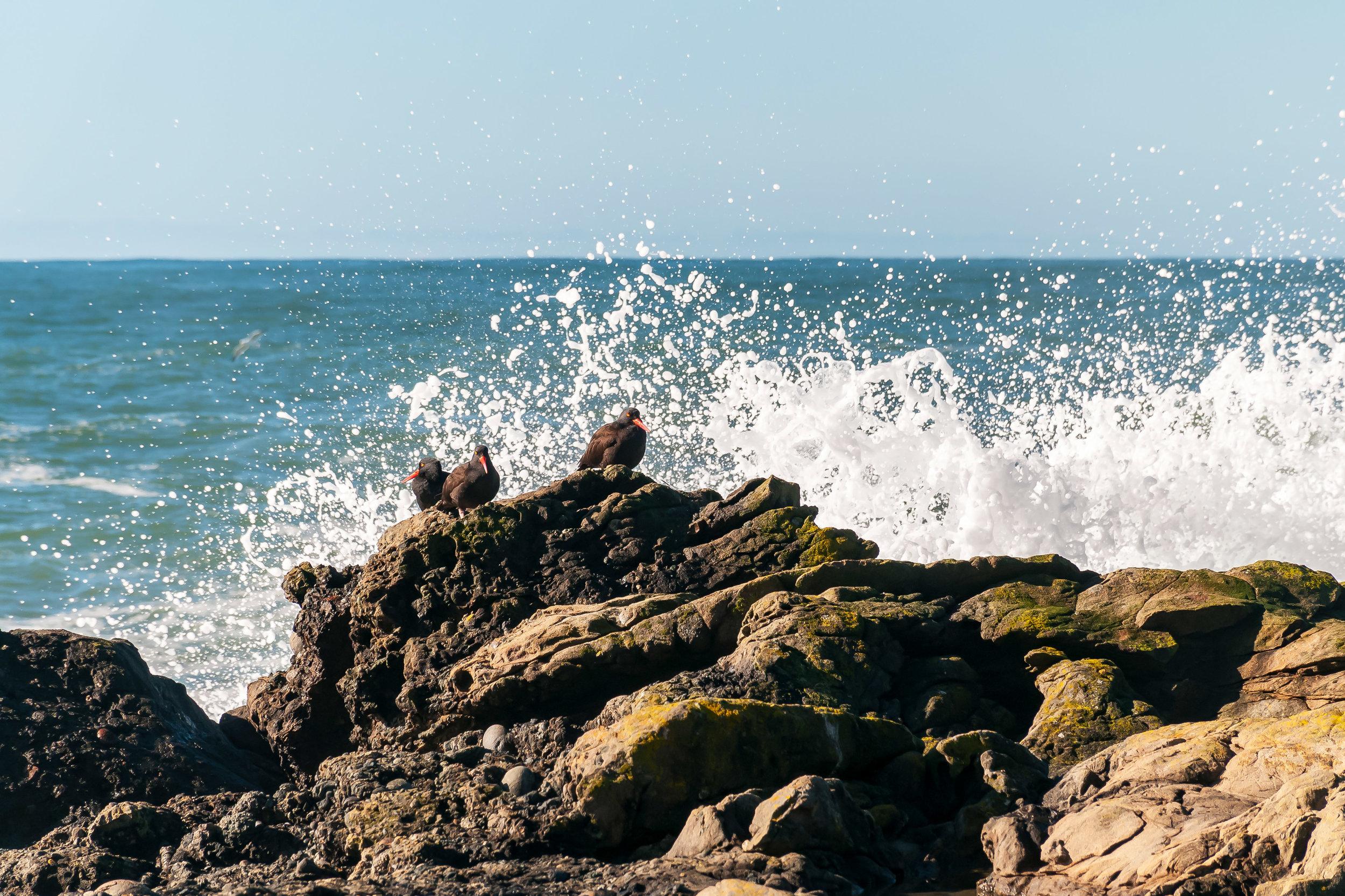 Enjoy an abundance of Birds and Sea Creatures