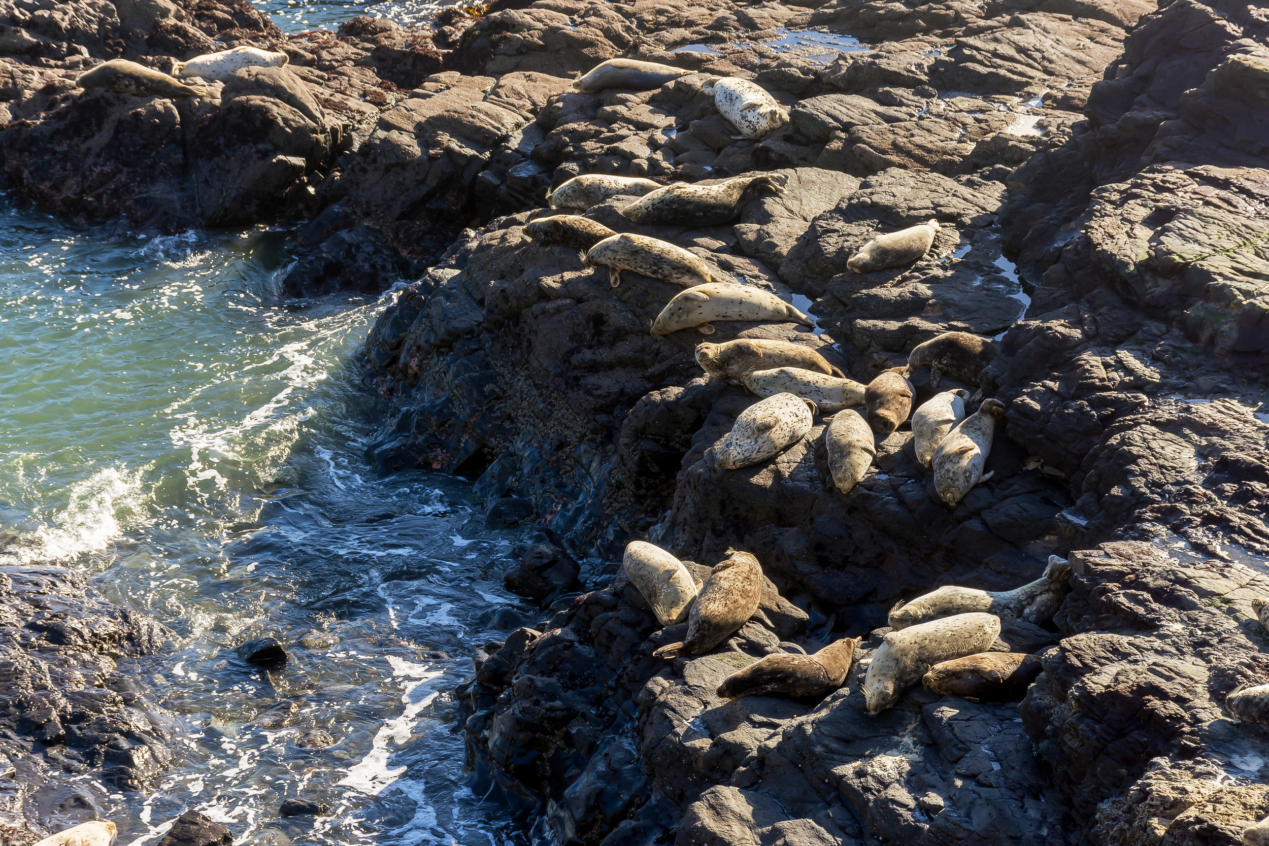 These seals and sea lions are your neighbors