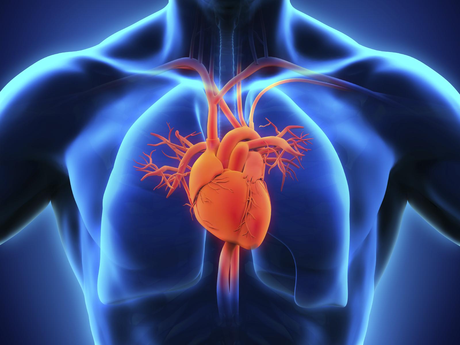 heart health 3.jpg