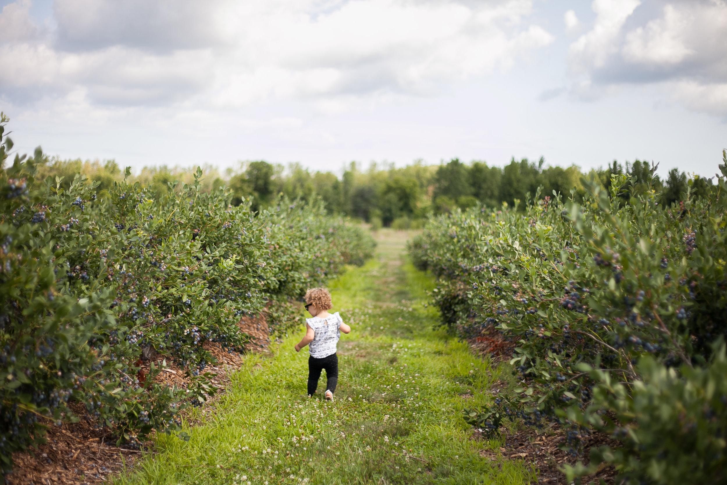 Avery berries-1.jpg
