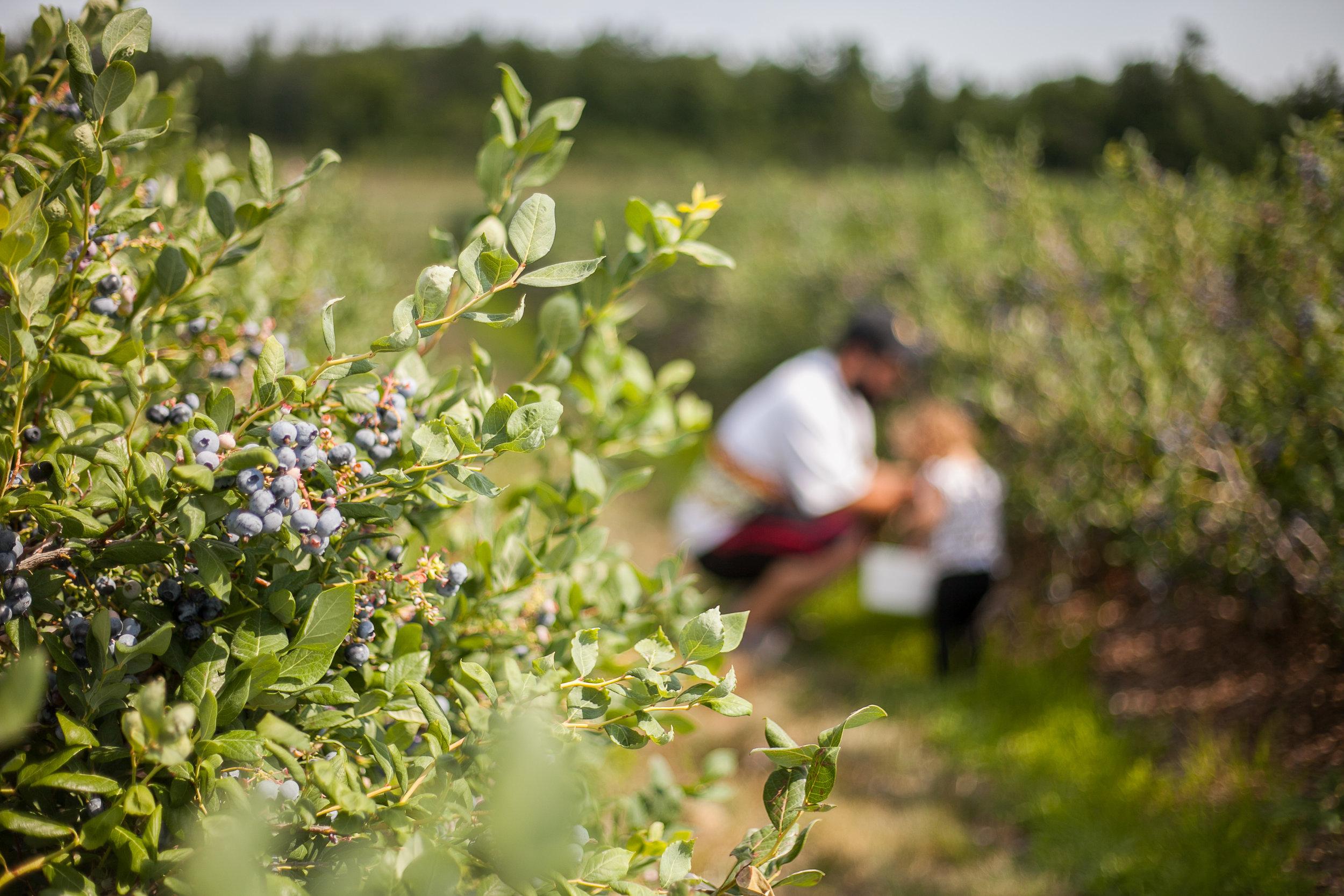 Avery berries-9.jpg