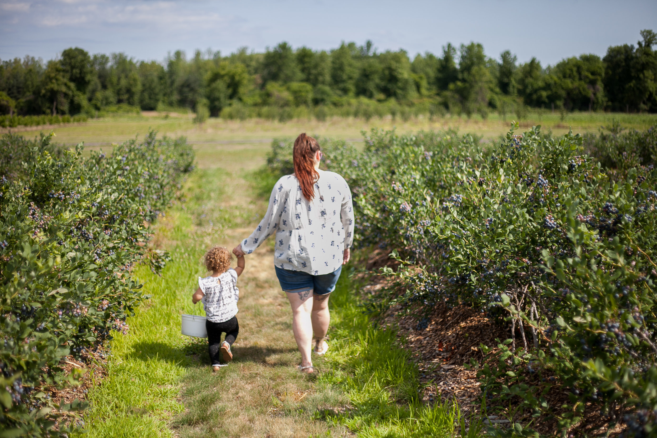 Avery berries-12.jpg