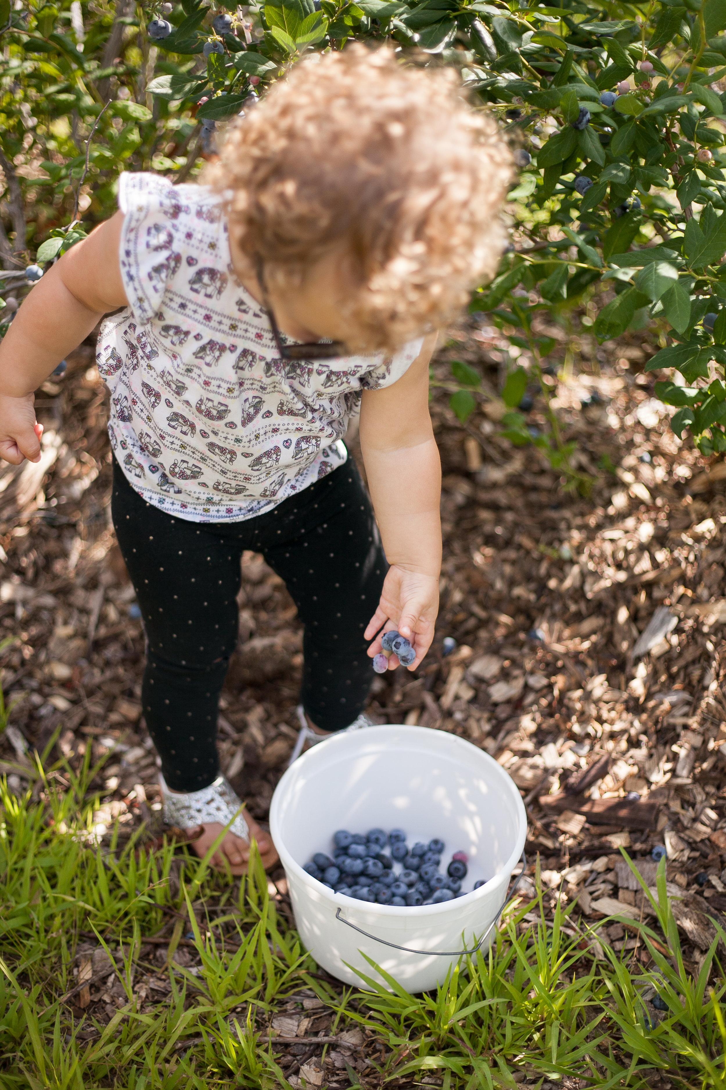 Avery berries-5.jpg