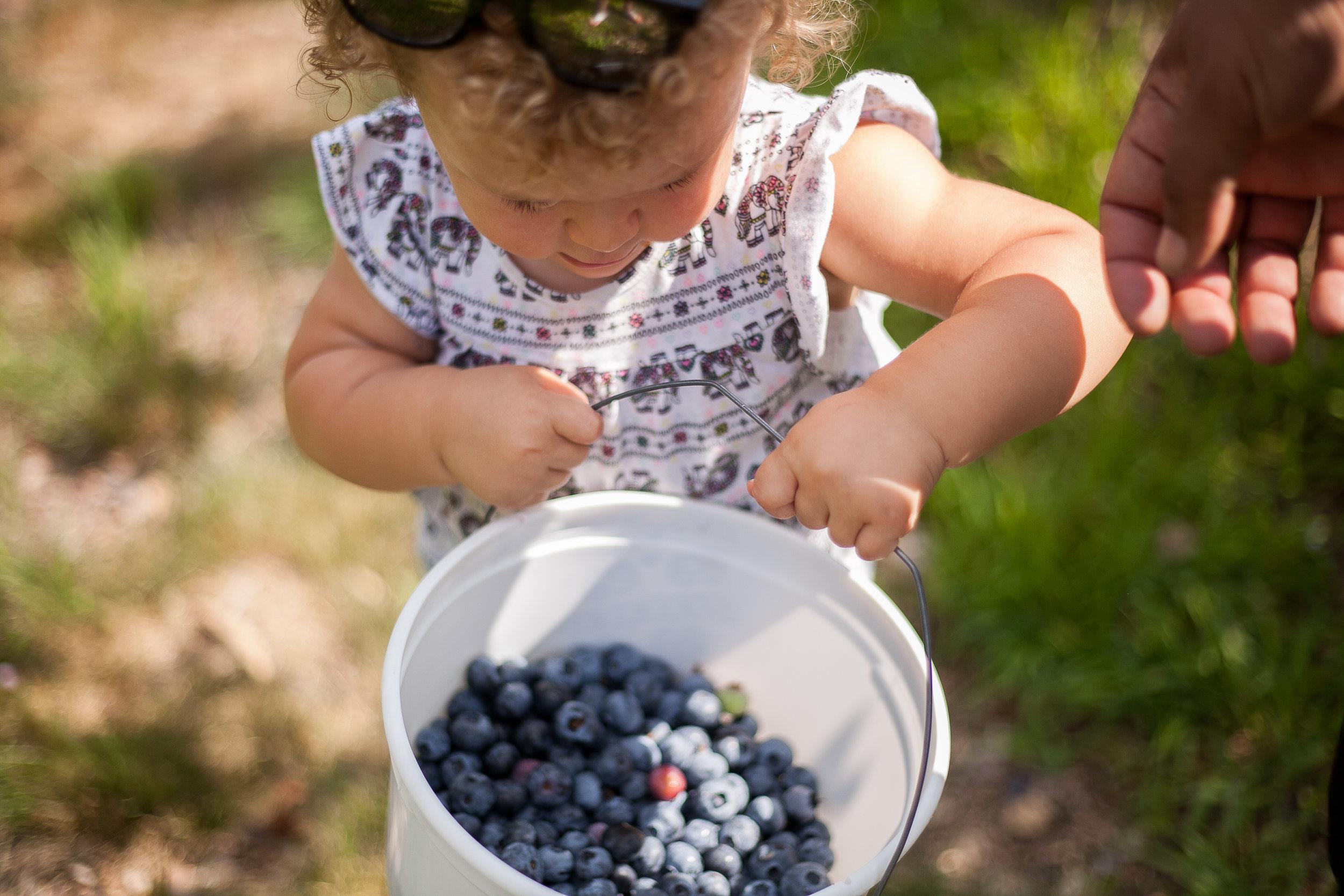 Avery berries-17.jpg