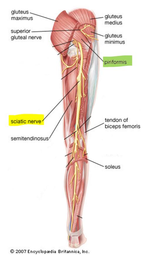 Chiropractic Carlsbad Sciatica