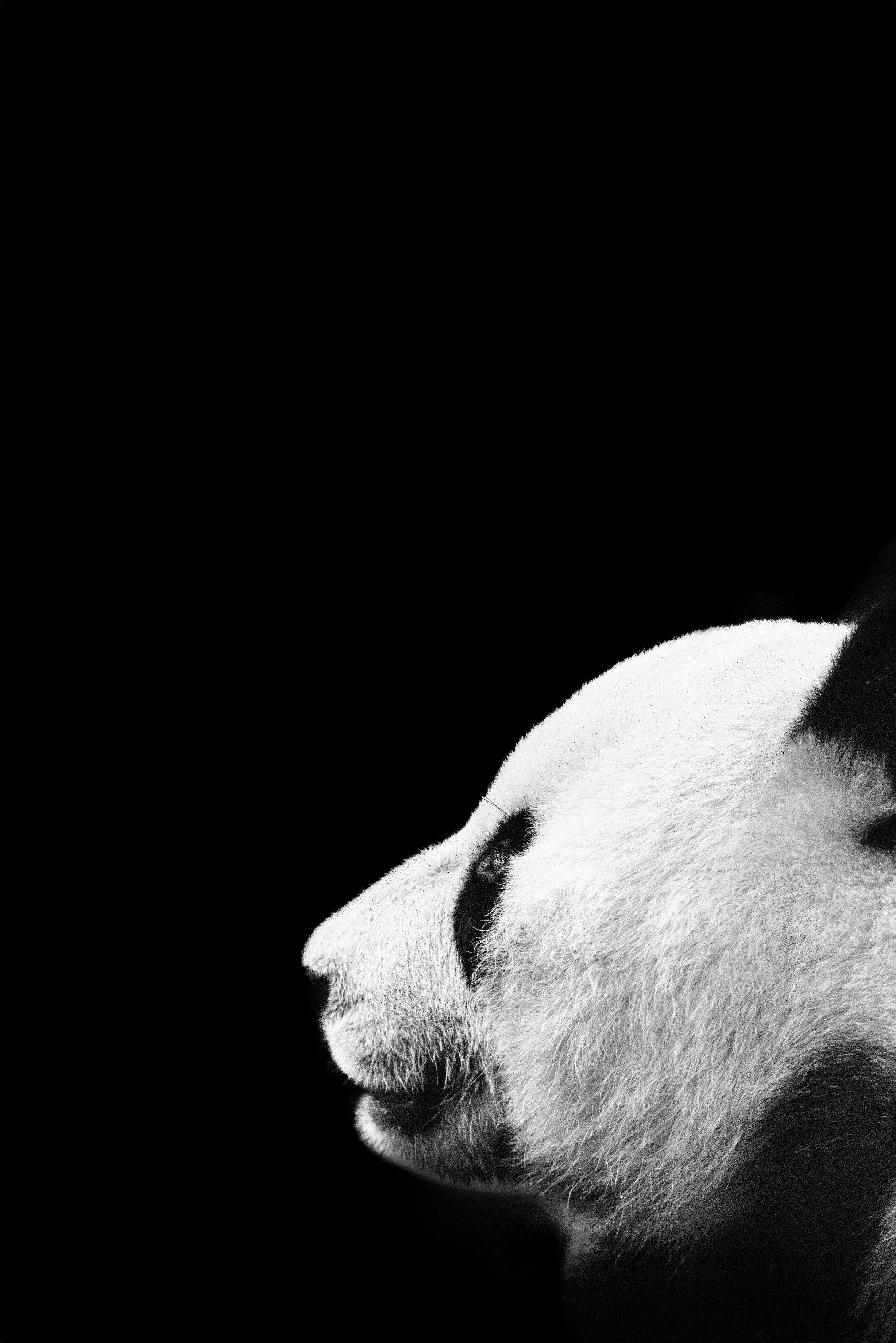 Panda-TIFF.jpg