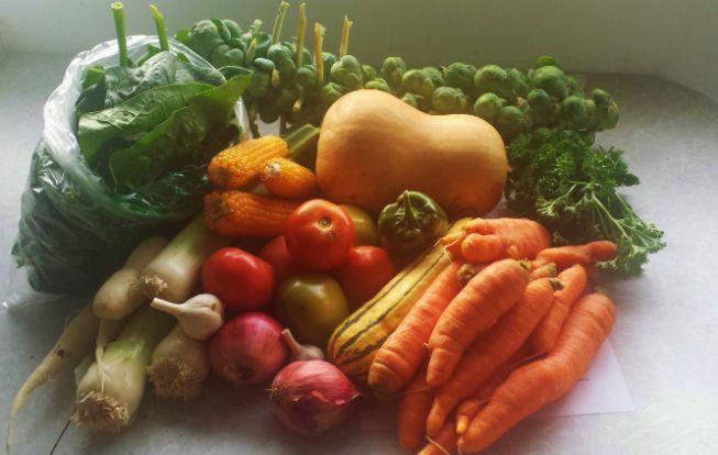 Summer veggies Oct..jpg