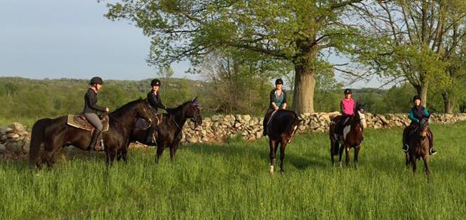 Group Trail Riding in Summer