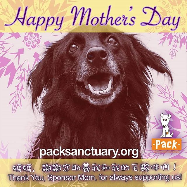 For all the animals moms out there. happy moms's day.  #mothersday #adoptapet #adoption #dogstagram #dogsofinstagram #shelterdog