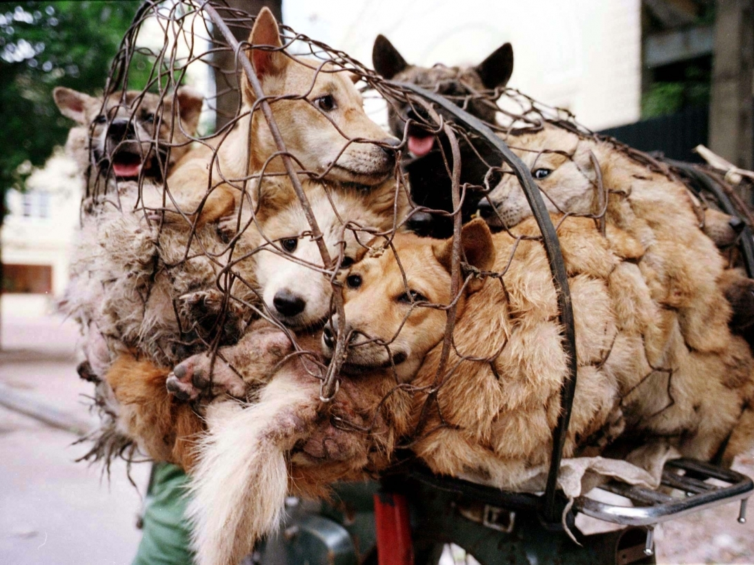 SIGN THE PETITION HERE: STOP THE YULIN DOG MEAT FESTIVAL
