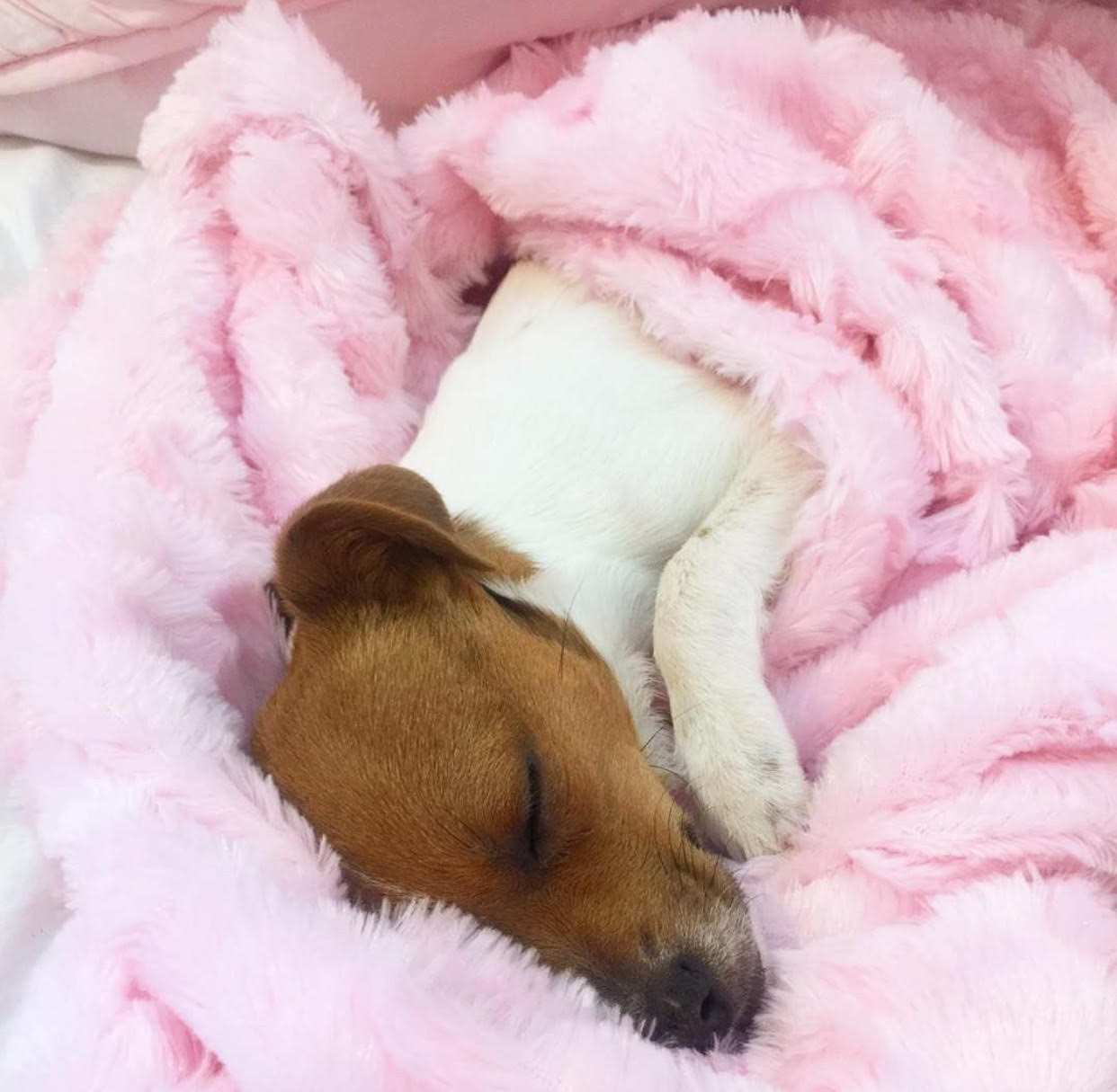FIONA IS ALL SNUGGLED UP WITH HER NEW FAMILY - SHE IS ONE SPOILED LITTLE PUP... AS SHE SHOULD BE!