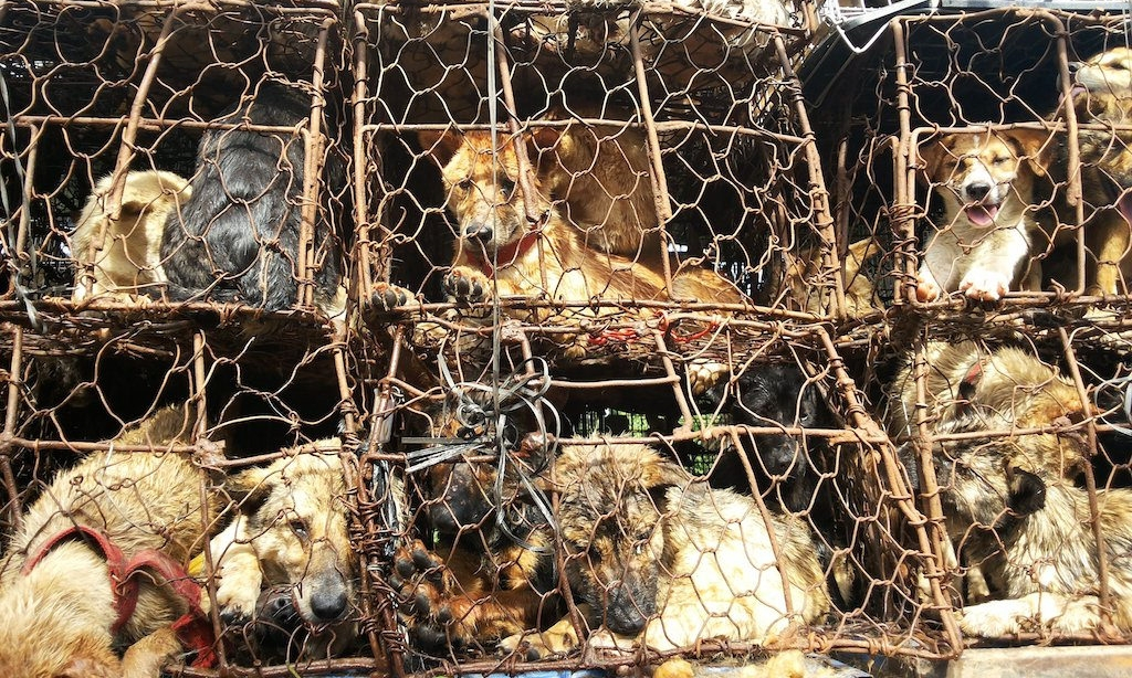 OUR SISTER ORGANIZATION STOP YULIN FOREVER