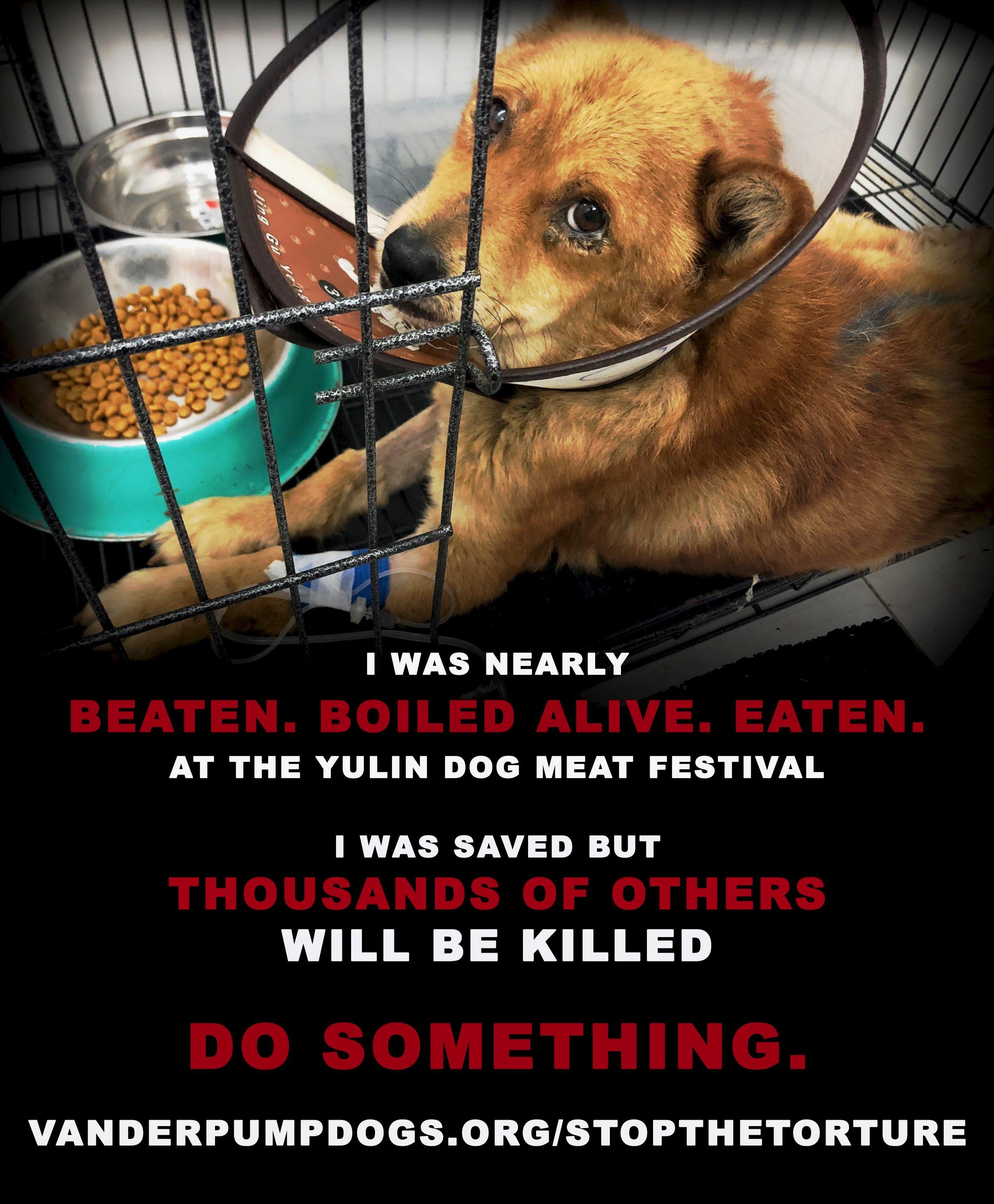 StopTheTorture Campaign — The Vanderpump Dog Foundation