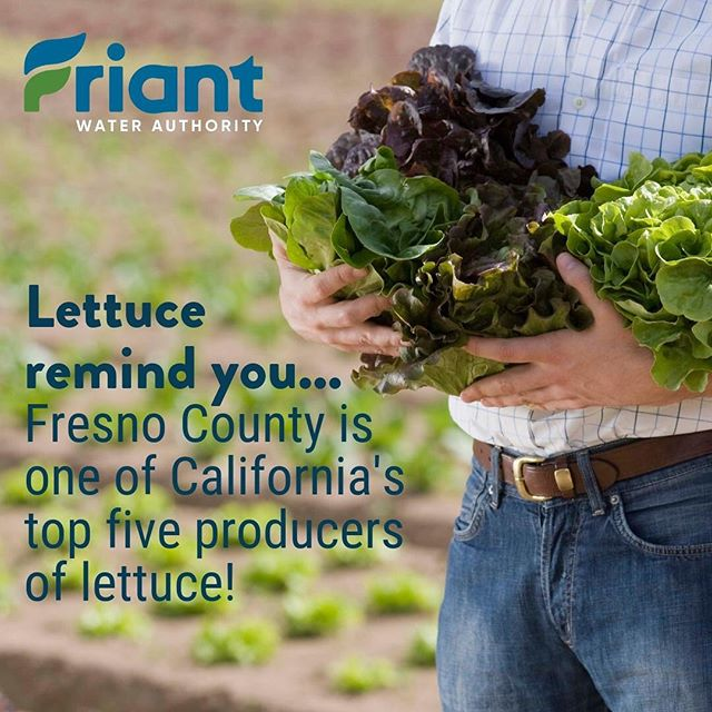#DYK: #Fresno County is one of California's top five #lettuce producers, according to the California Department of Food and Agriculture's 2018 Agricultural Statistics Review! bit.ly/2WfAAA1 #water #agriculture #CentralValley #cawater #farmers #ag