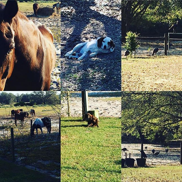 Horses, dogs and wild turkeys. Must be a Leaves Family Reunion. Great to be back home in the south.