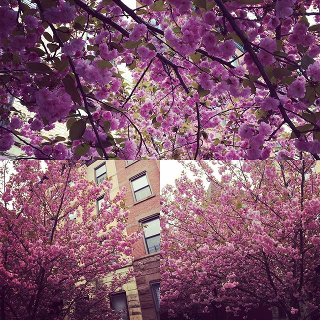 Oh hello, Pretty...you've certainly blossomed since last we met. #springday #treehugger