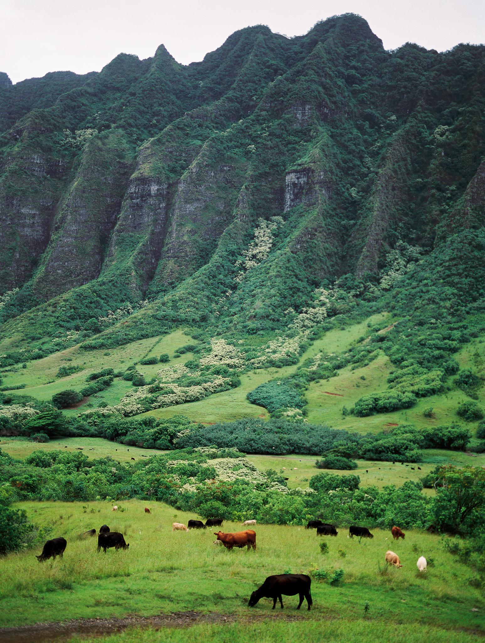 Hawaii Vacations-25.jpg