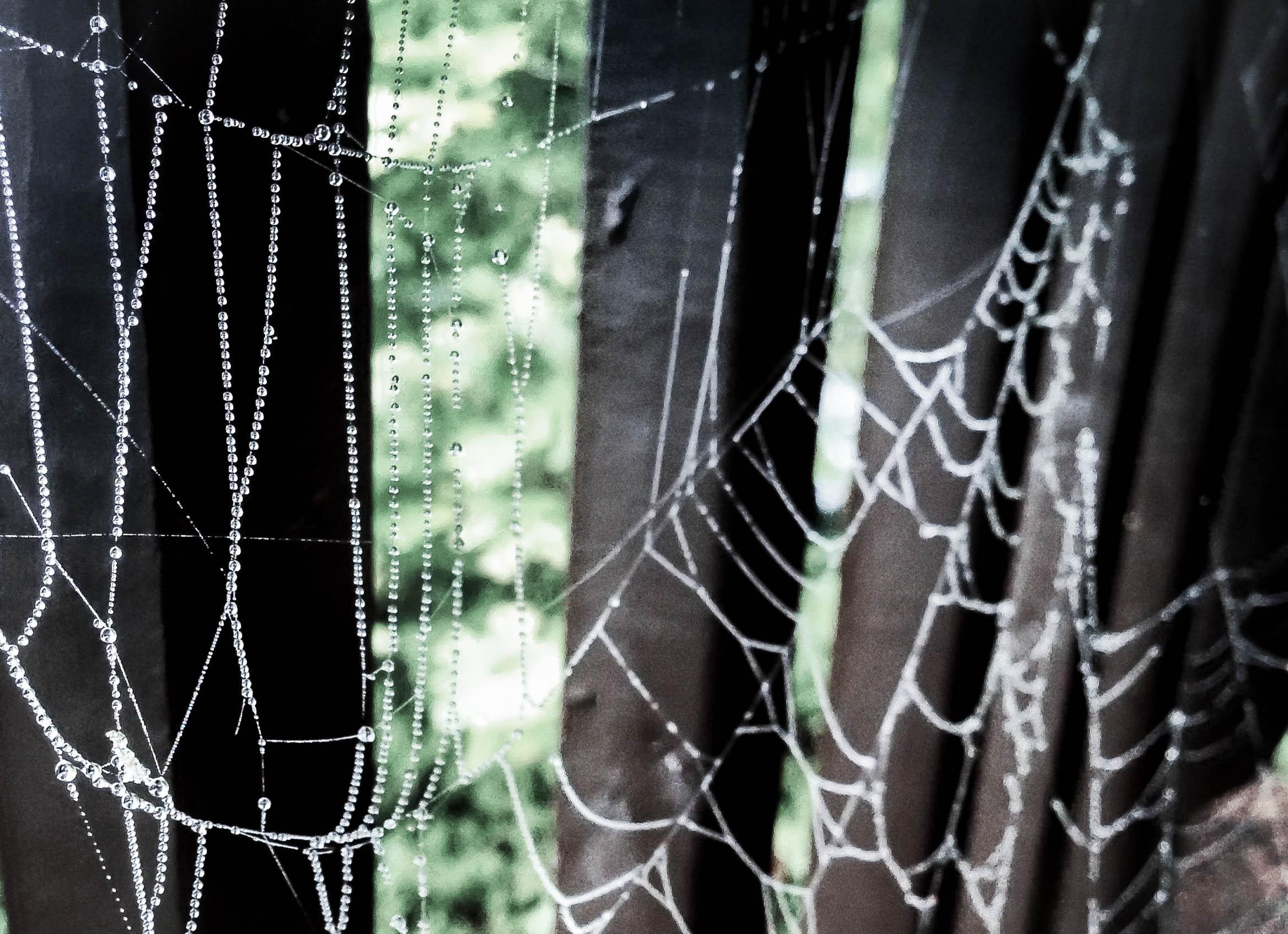 Dewy spiderweb.jpg
