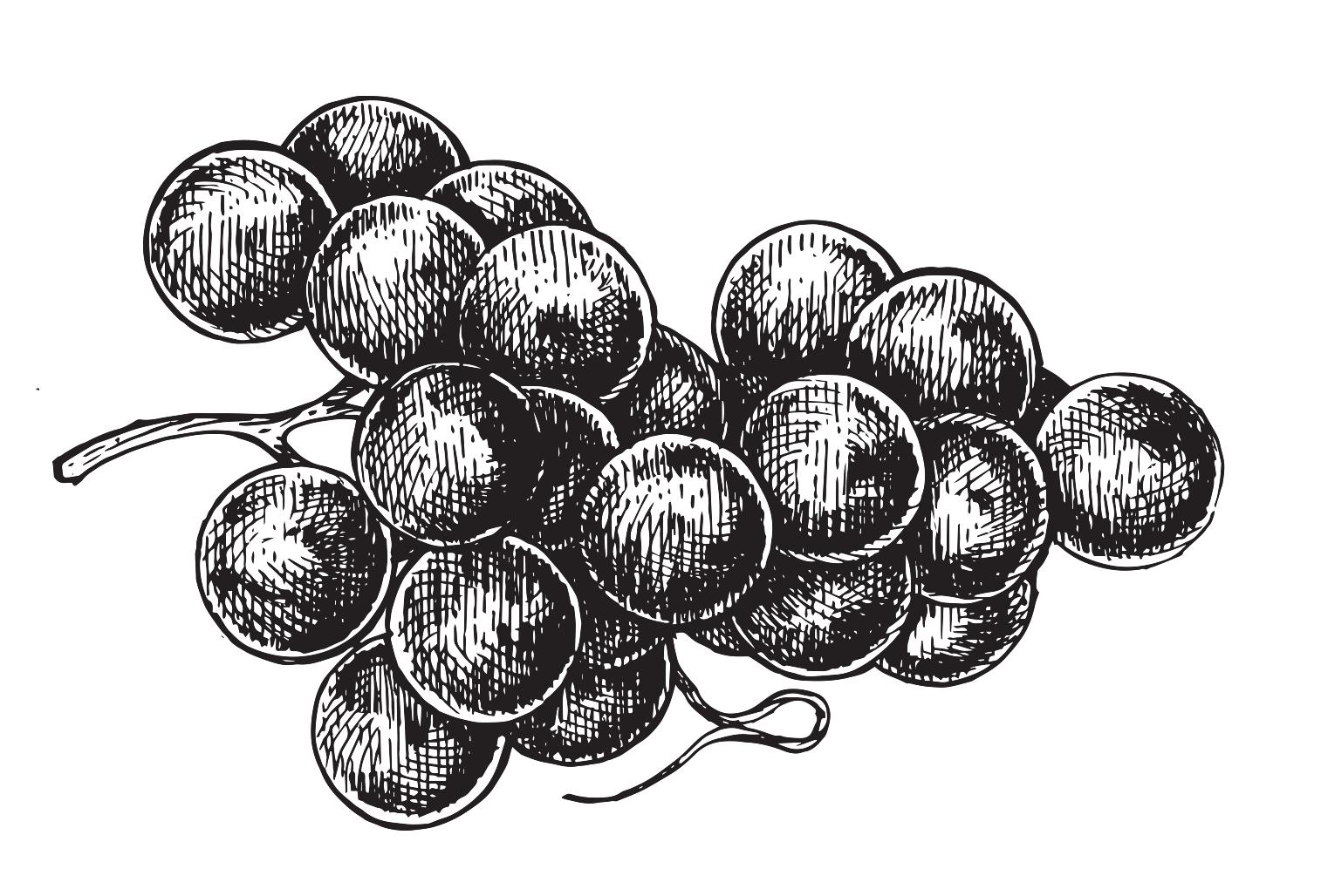 vect_grapes.jpg.png