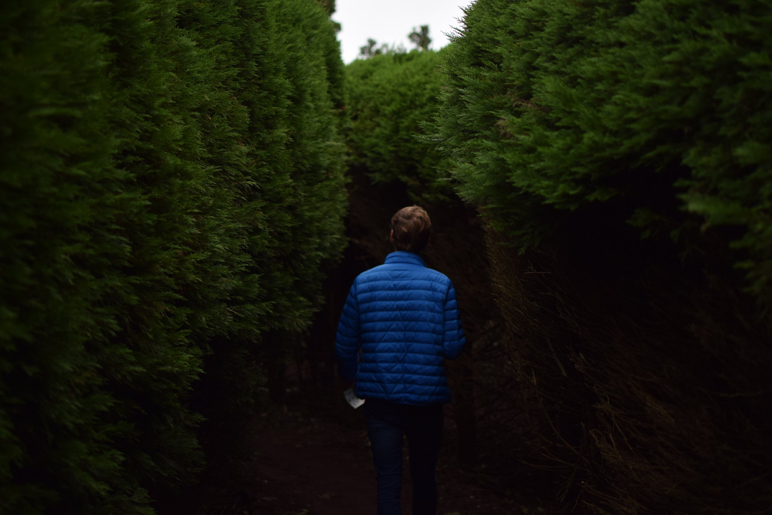 lost in hedges