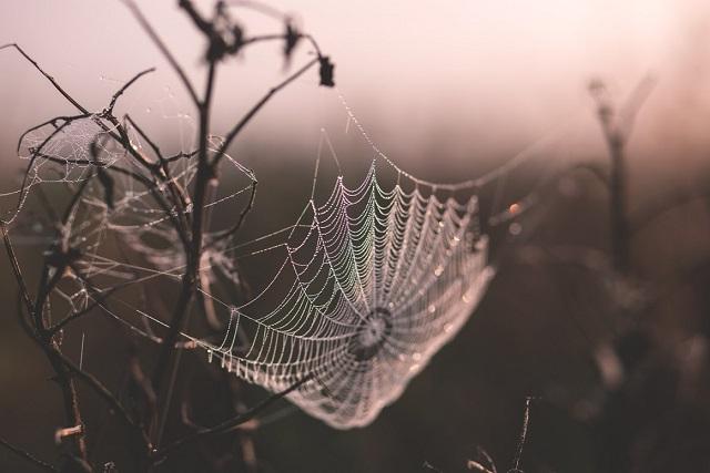 spider+web resized.jpg