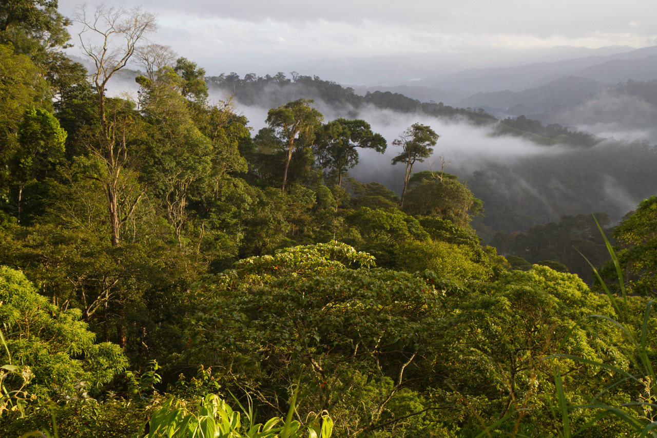 """What a """"Bird Friendly"""" landscape looks like. Almost everything in this photo of the northern Nicaraguan highlands, to the horizon, is a traditional shade coffee farm, certified as both USDA Organic and """"Bird Friendly"""" by the Smithsonian Migratory Bird Center. (©Scott Weidensaul)"""