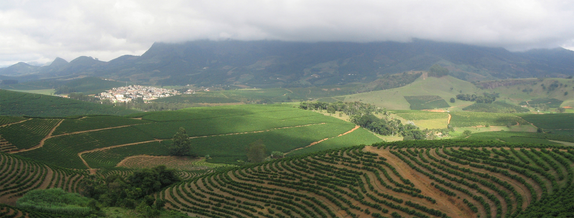 Sun grown coffee plantation in Brazil. Photo: Wikimedia Commons.