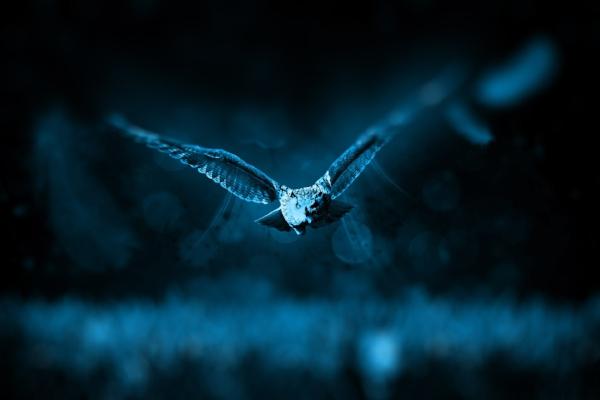 owl-518838_1920.jpg