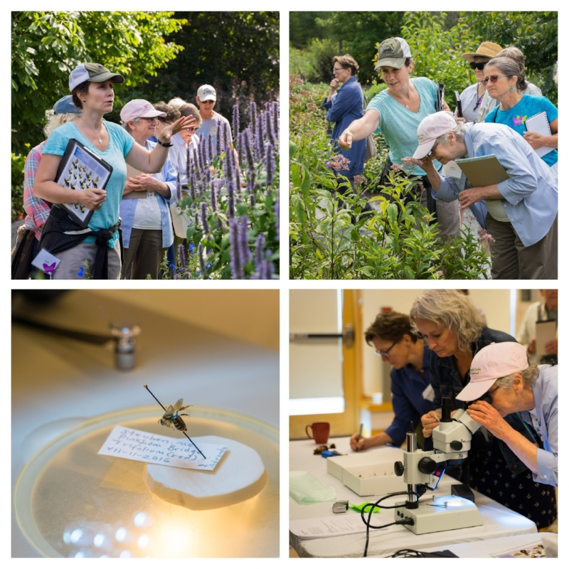 Leading a workshop on pollinators at The Coastal Maine Botanical Gardens (photos courtesy of Peter Brown).
