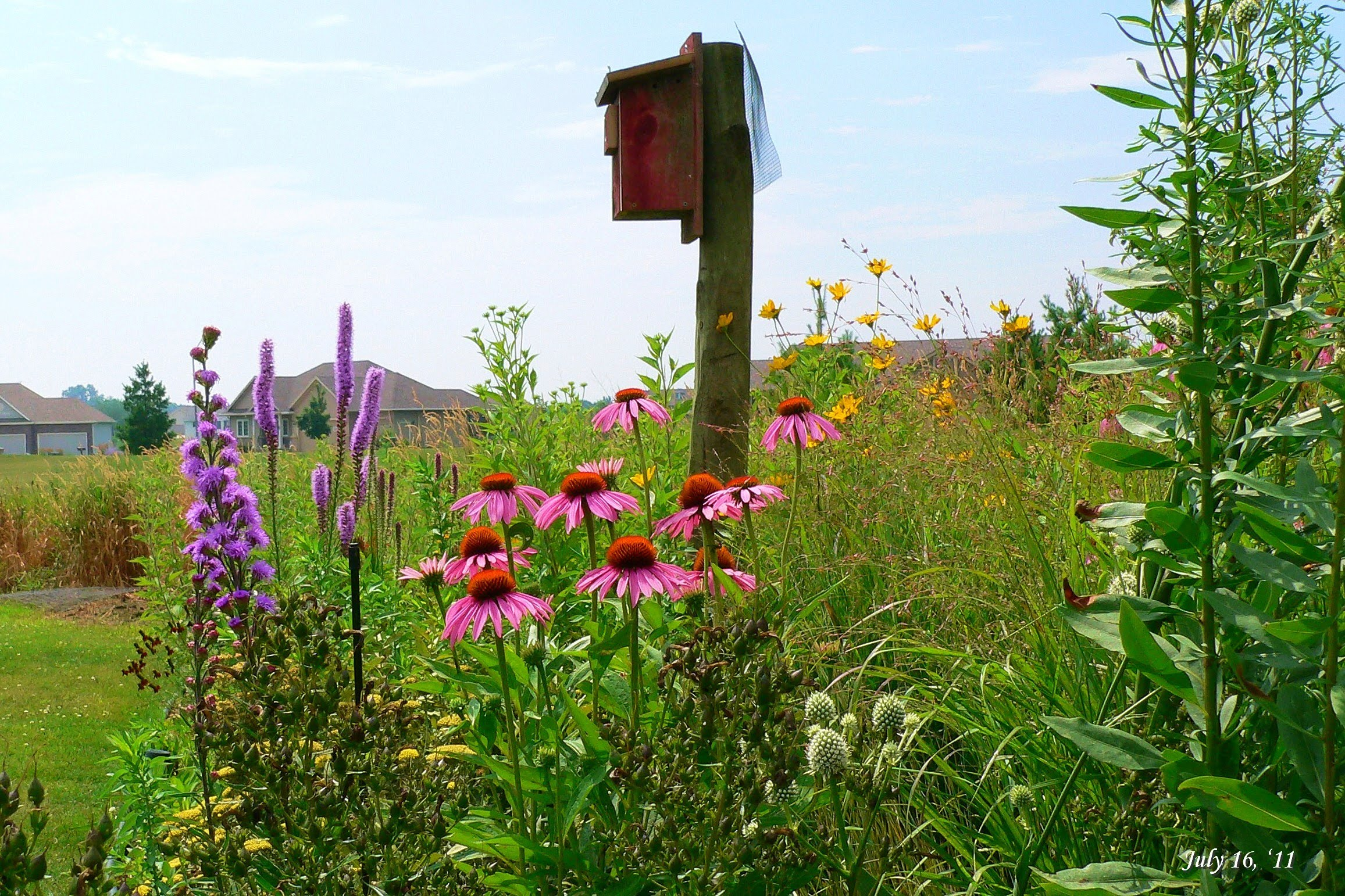 Tall native prairie flowers surrounding a bluebird box (photo: plant4wildlife on Flickr).
