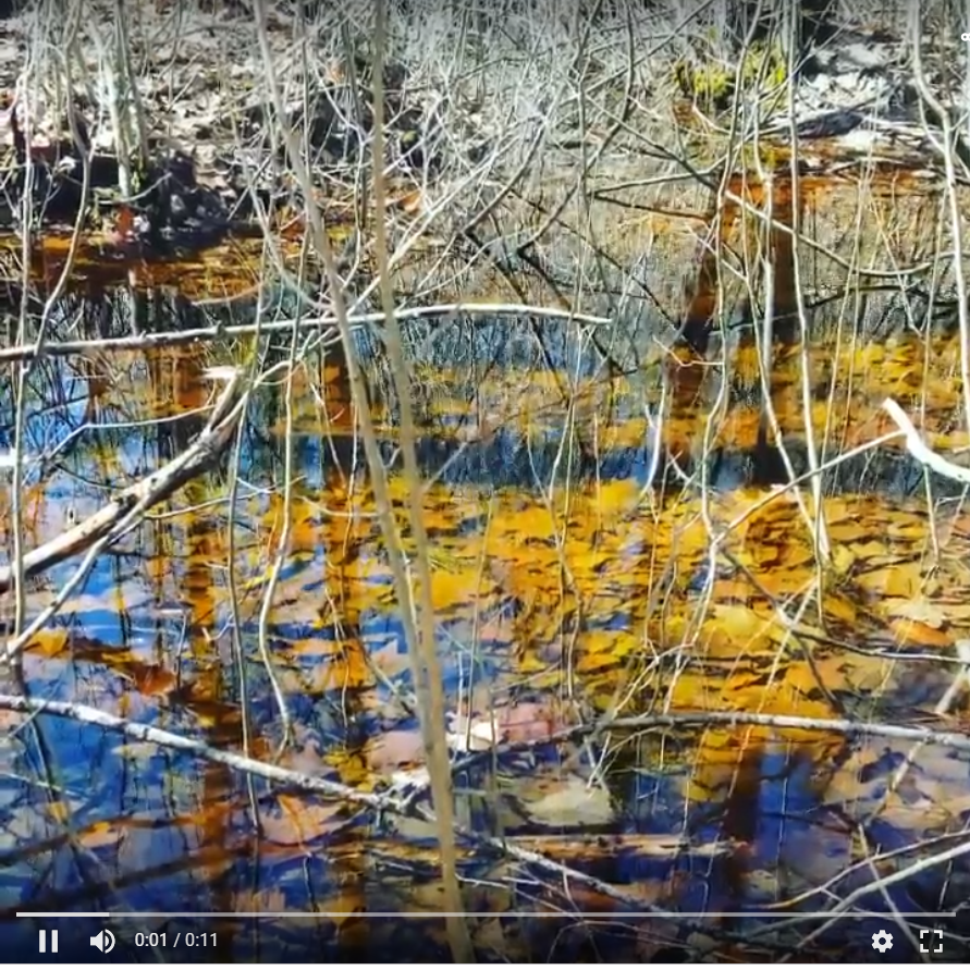 The vernal pool near our home (go to  video ).