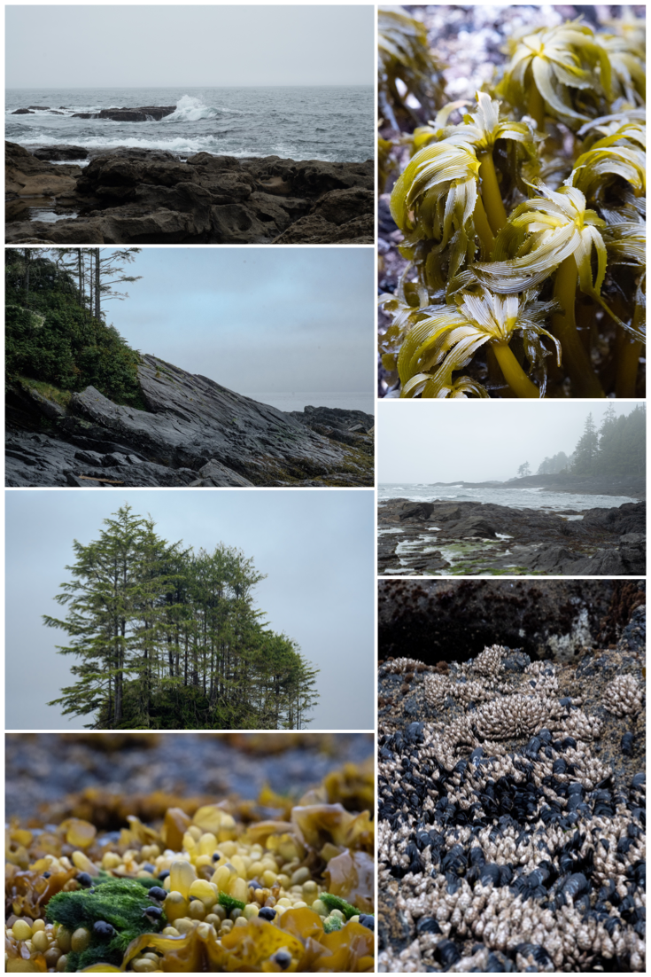 Botanical-Beach_collage.png