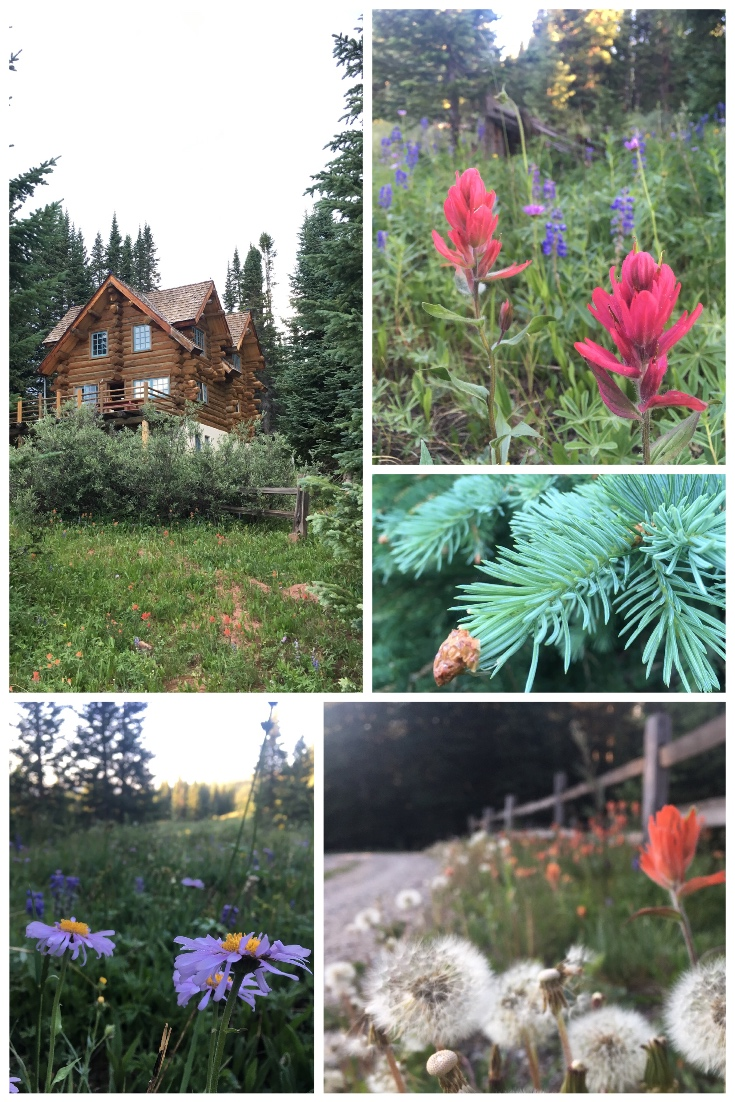 Wildflowers + Wool in the Colorado Mountains
